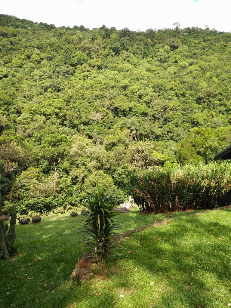 dichtbegroeide bos