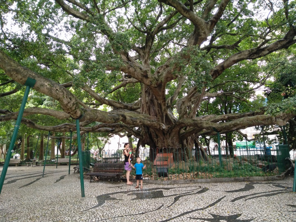 Florian Tree of Life